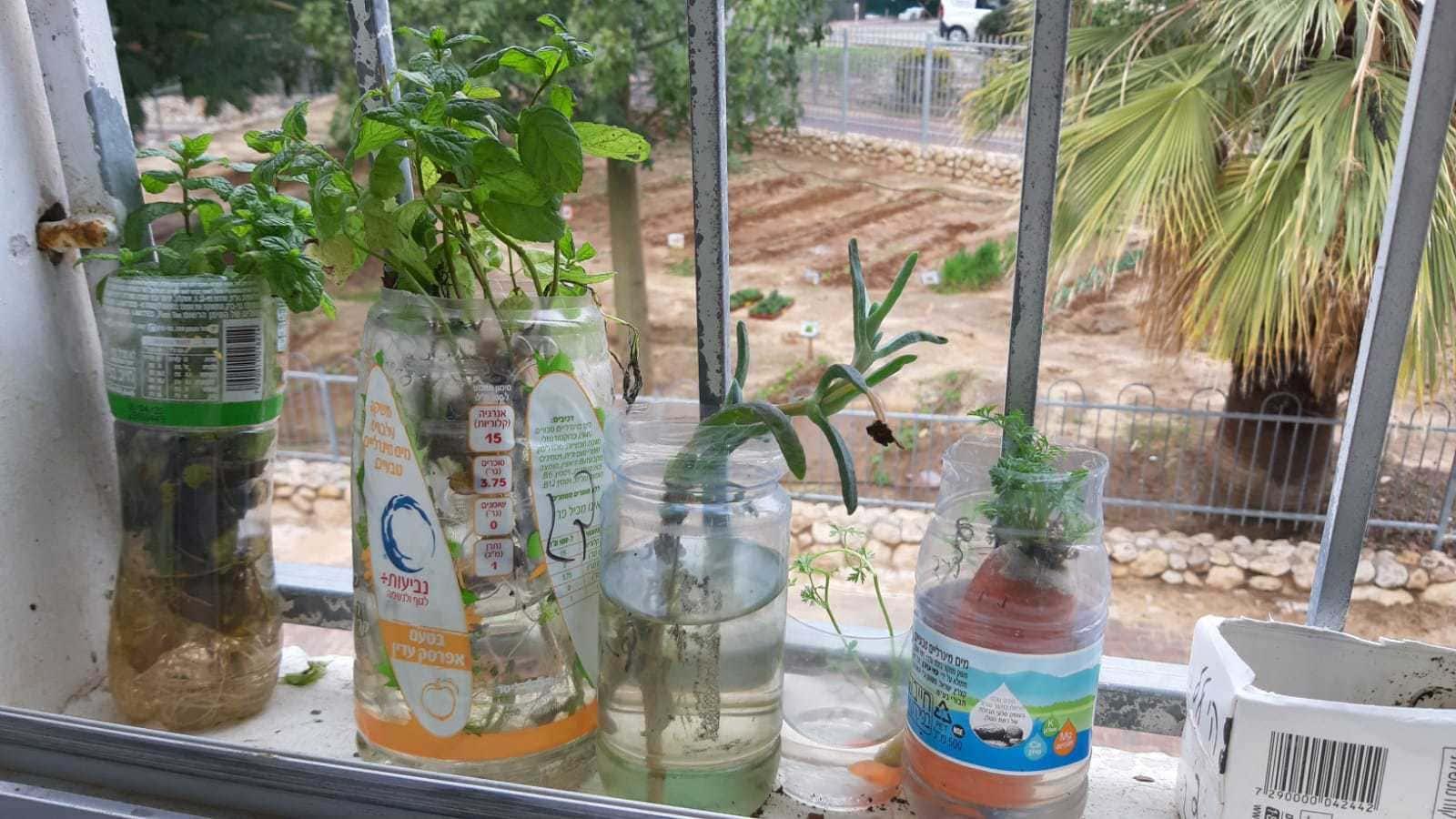 גינה מצמיחה